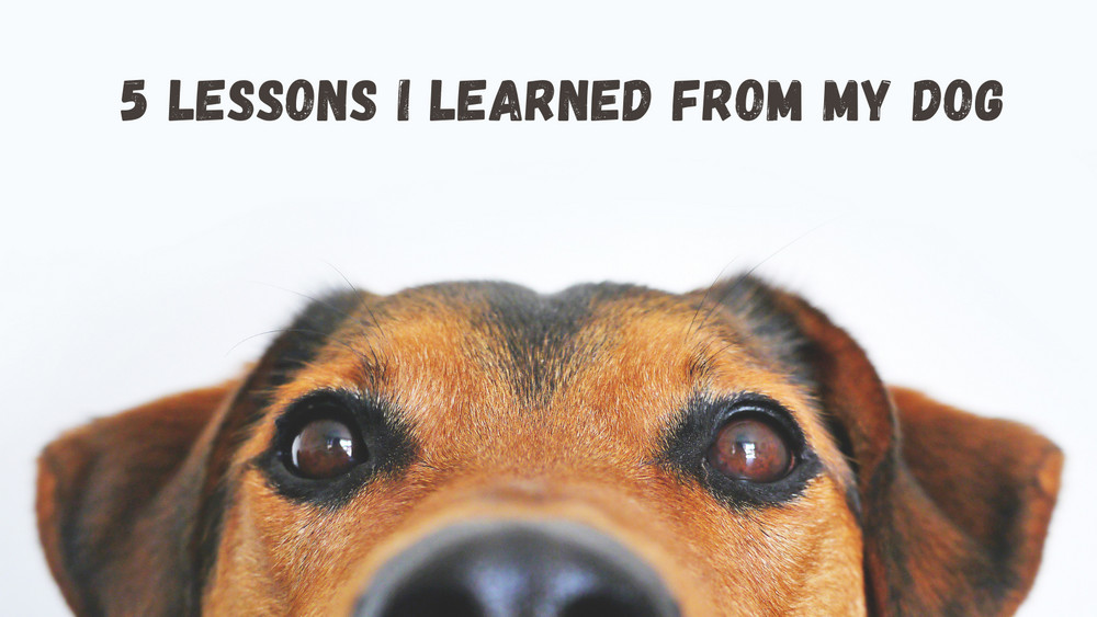 5 Lessons I Learned From My Dog